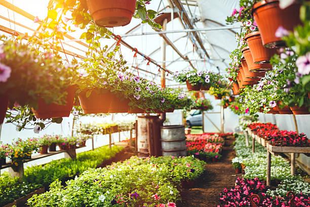 Flowers in plant nursery